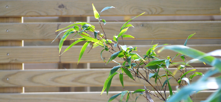 bamboofencing-edited