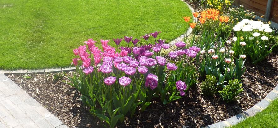spring-edit