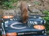 wildlife-joins-in